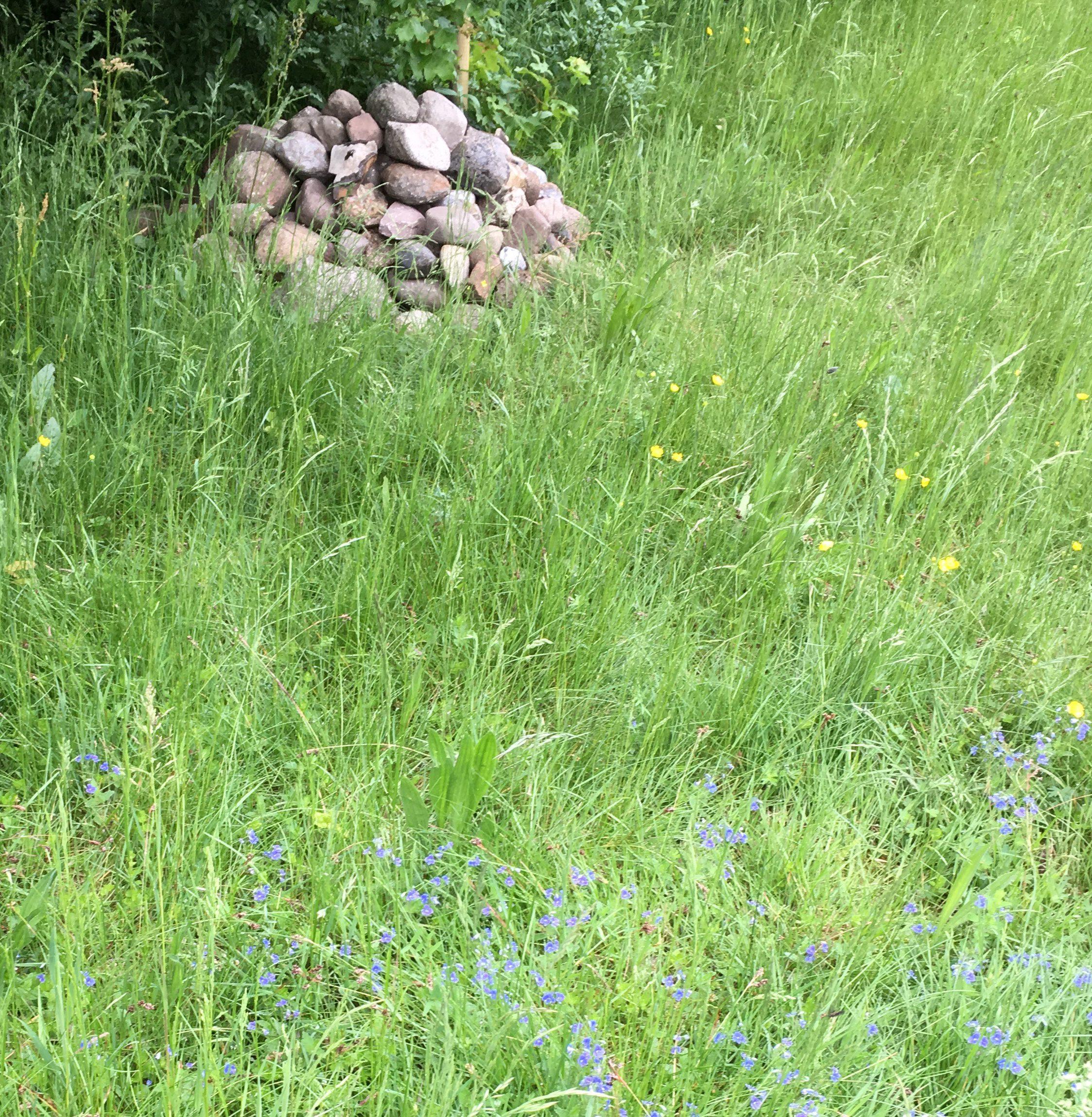 Ideal: Ein Steinhaufen und viele Futterpflanzen dicht beisammen.