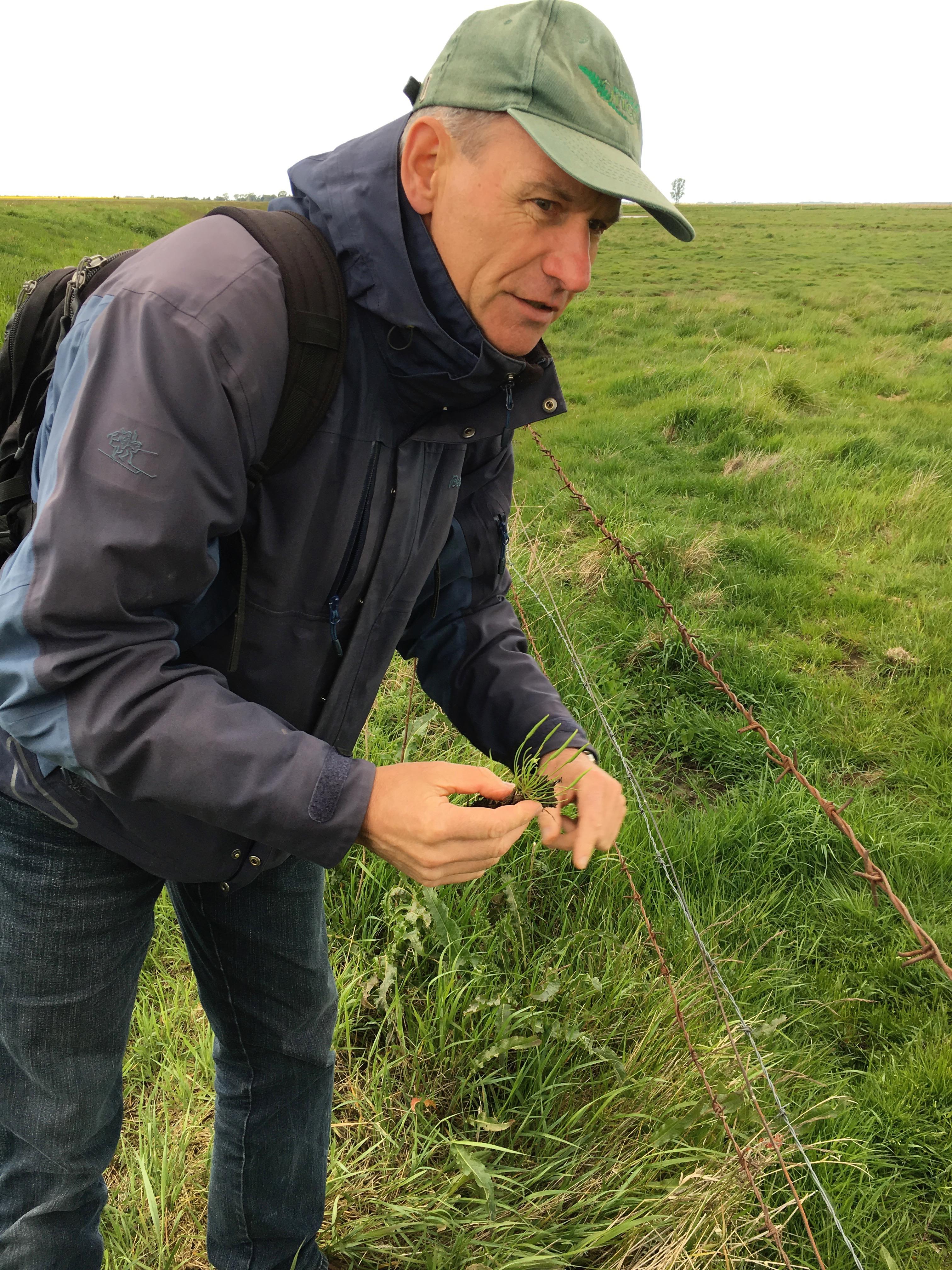 Das Mäuseschwänzchen mag es gerne frisch, das heißt feucht, erklärt der Botaniker Dr. Peter König.