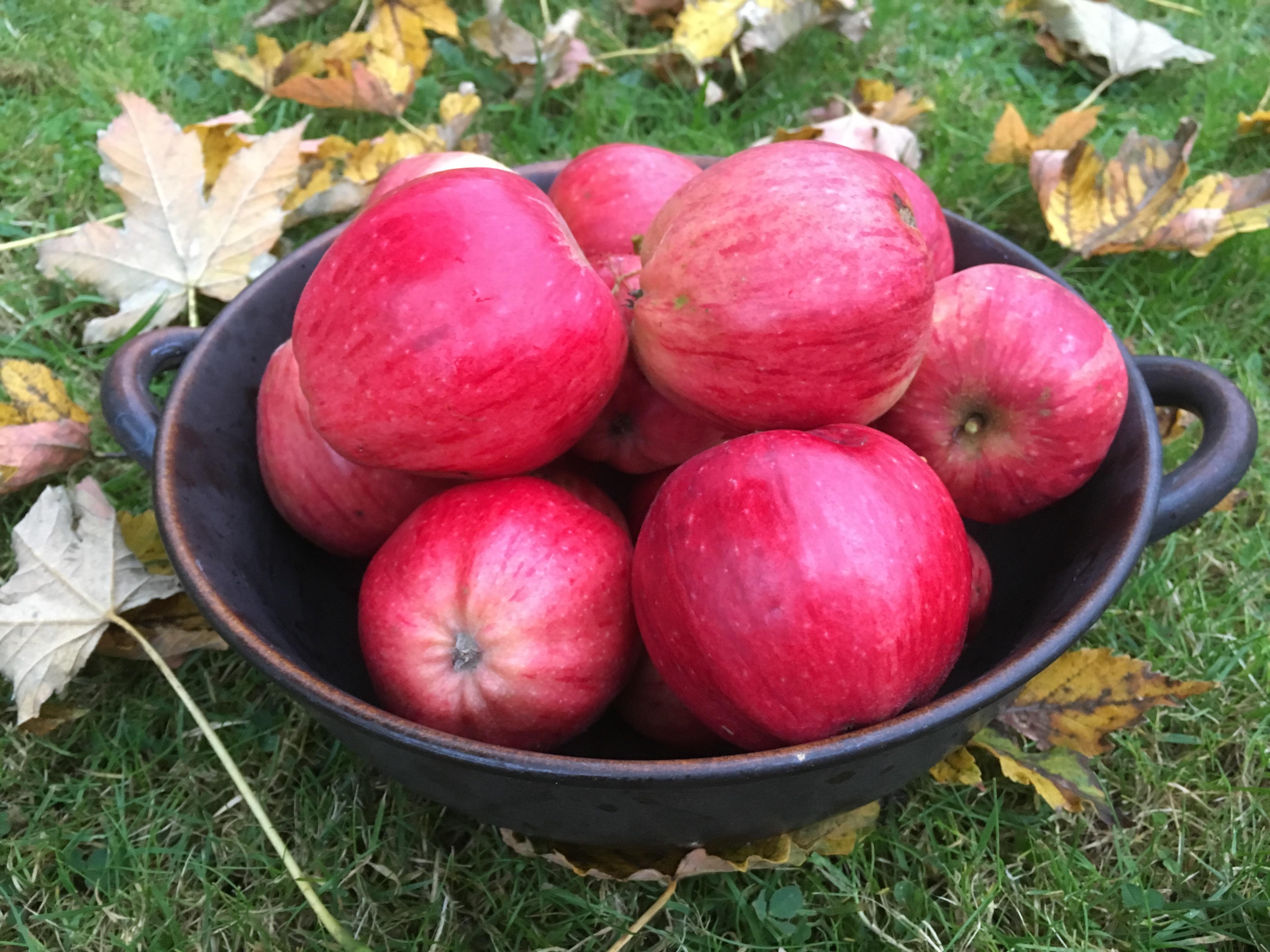 Schale mit roten Kantäpfeln