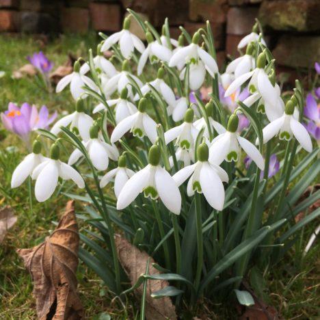 Tulpen für achtsame Gartenfreunde