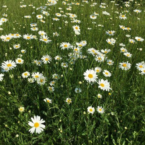 Das Wunder am Gartenteich