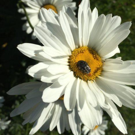 Bei den Bienen punkten