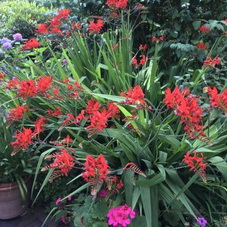 Fleißige Pflanze für faule Gärtnerinnen
