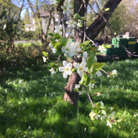 In Loki Schmidts Garten
