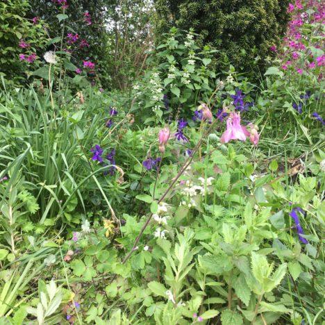 Mein blauer Naturgarten