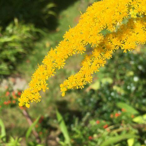Spätsommer-Blüten